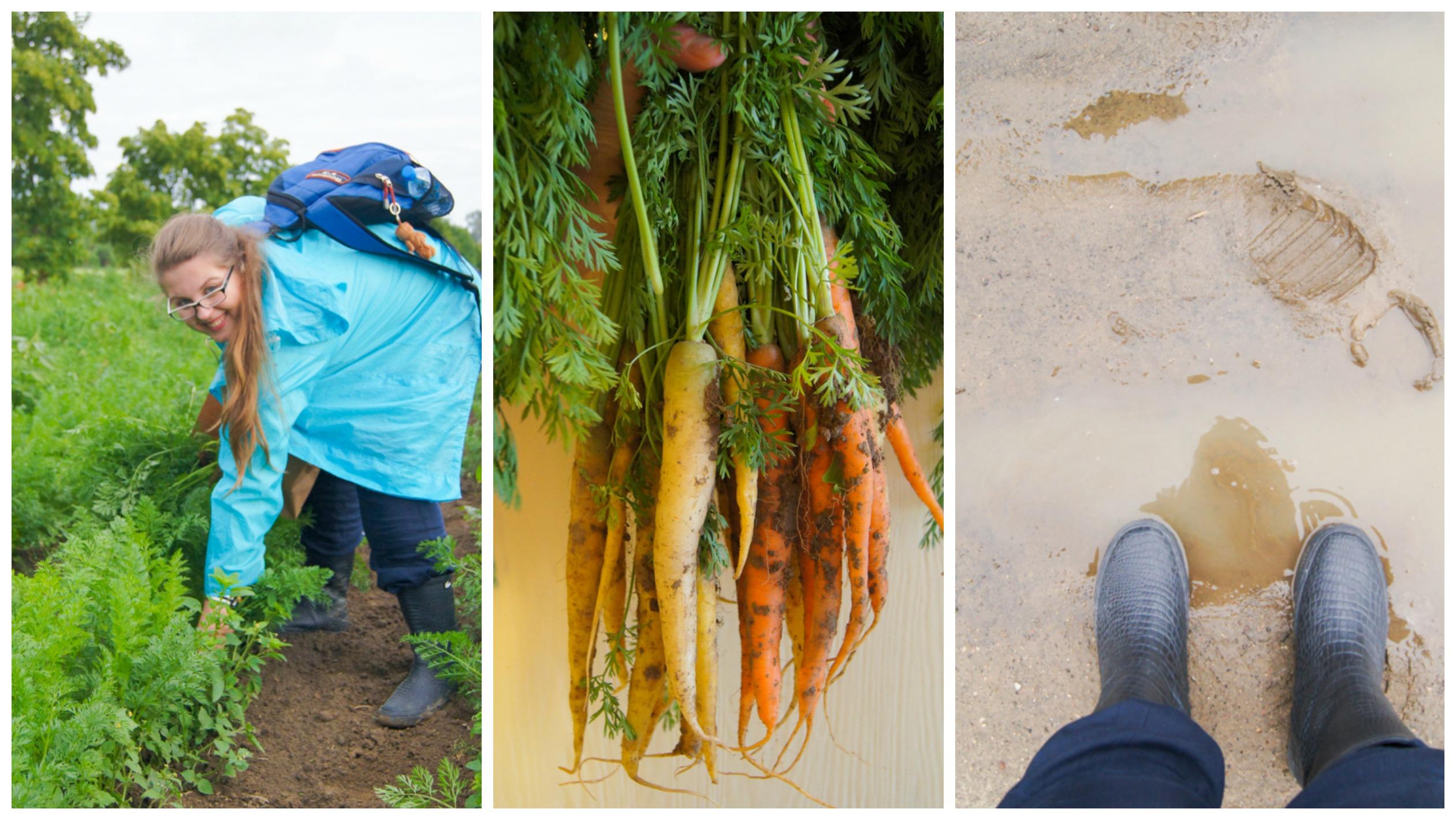 zdrowe-jedzenie-1-Collage